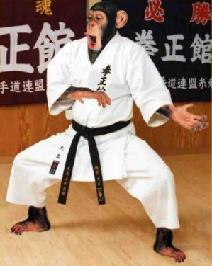 Name:  karate-3.JPG Views: 8169 Size:  12.7 KB