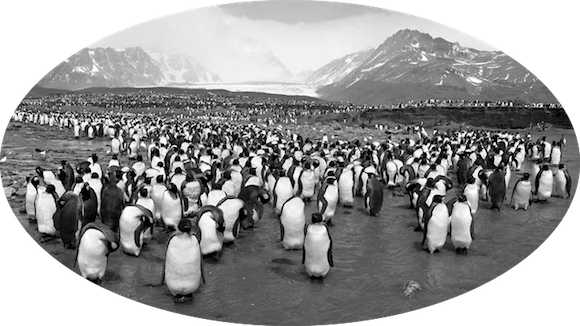 Name:  penguins.png Views: 55 Size:  194.9 KB