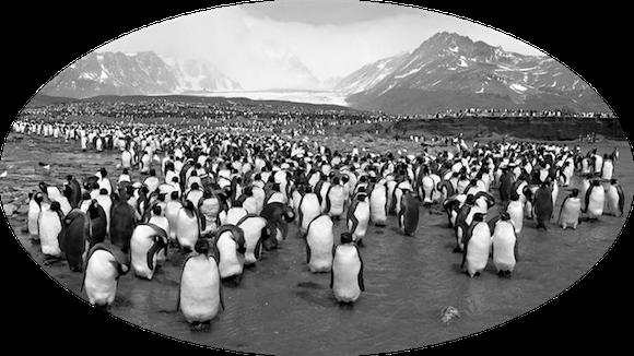 Name:  penguins.png Views: 25 Size:  194.9 KB