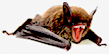 Name:  Clockwork Bat.png Views: 236 Size:  9.3 KB