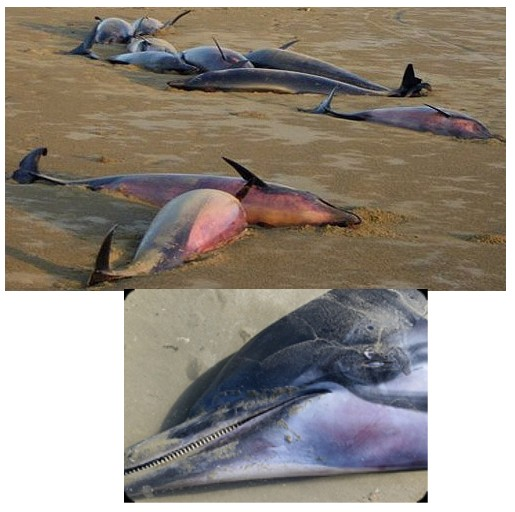 Name:  4_5Dolphins2.jpg Views: 2735 Size:  62.4 KB