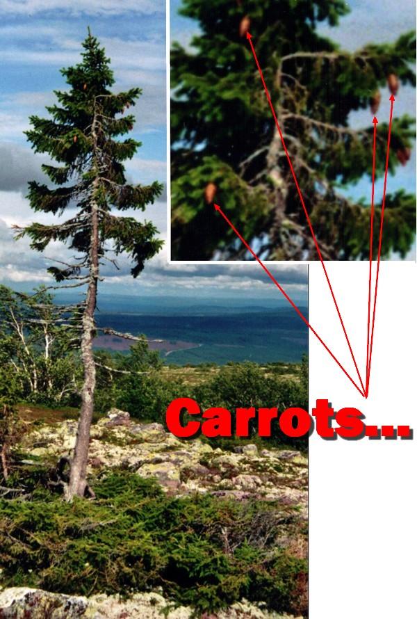 Name:  Tree.jpg Views: 156 Size:  174.0 KB