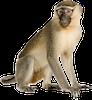 Name:  monkey.png Views: 106 Size:  16.0 KB