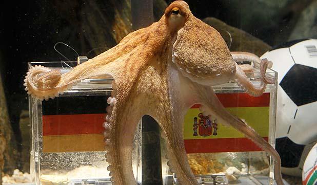 Name:  Octopus.jpg Views: 831 Size:  40.0 KB