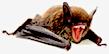 Name:  Clockwork Bat.png Views: 230 Size:  9.3 KB