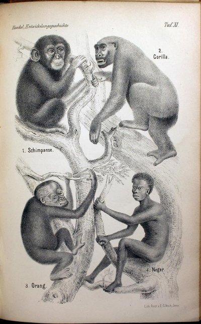 Name:  rsz_negro-monkey-encyclopeadia.jpg Views: 811 Size:  69.0 KB