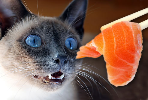 don't feed cats salmon